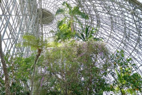 "Yumenoshima Tropical Greenhouse Dome_(2017_05_05)_2_resized_1 ""夢の島熱帯植物館"" のドームの中を撮影した写真。 高い天井に向かって熱帯植物が生い茂っている。"