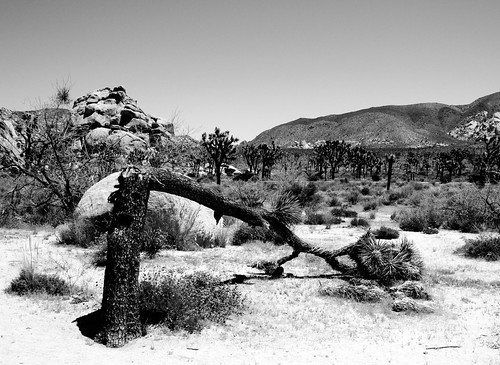 Joshua Tree National Park (0079)