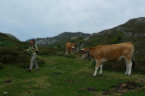 Ruta de Caoru - Picos de Europe - near Las Arenas, Spain