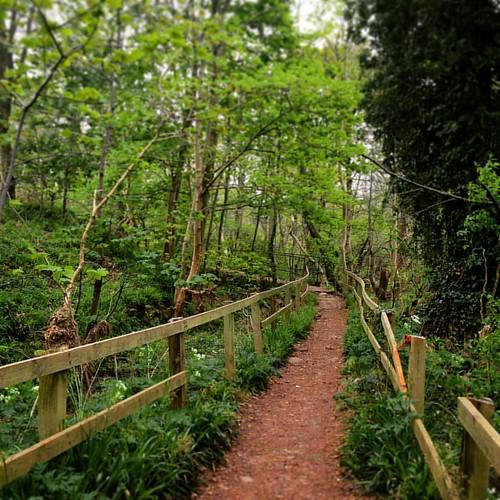 Woodland near Edzell . #edzell #angus #scotland #scottishscenery