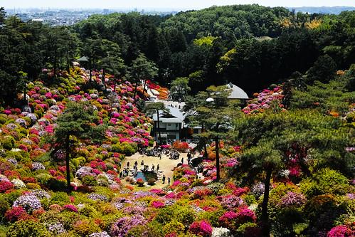 Shiofune Kannon temple Azalea Festival 2017 34