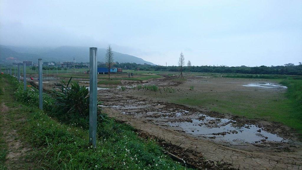 栽植外來種的落羽松。圖片來源:中華鳥會提供。