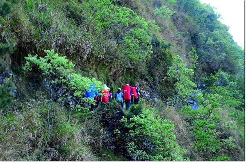 玉山登山步道 1