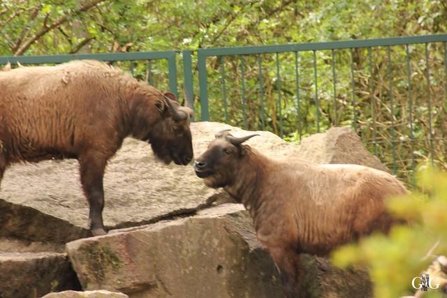 Besuch Tierpark Friedrichsfelde 17.04.1743