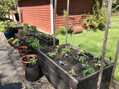 2017 summer garden