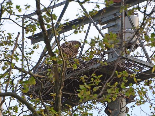 GT Hawk Nest - 2800