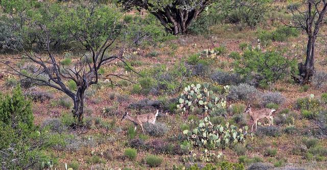 Deer-47-7D2-041717
