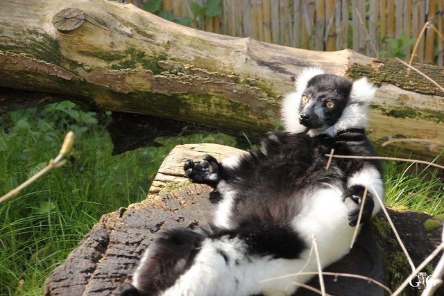 Besuch Tierpark Friedrichsfelde 17.04.1753