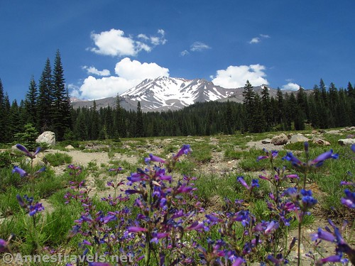 Wildflowers in Bunny Flat near the trailhead, Shasta-Trinity National Forest, California