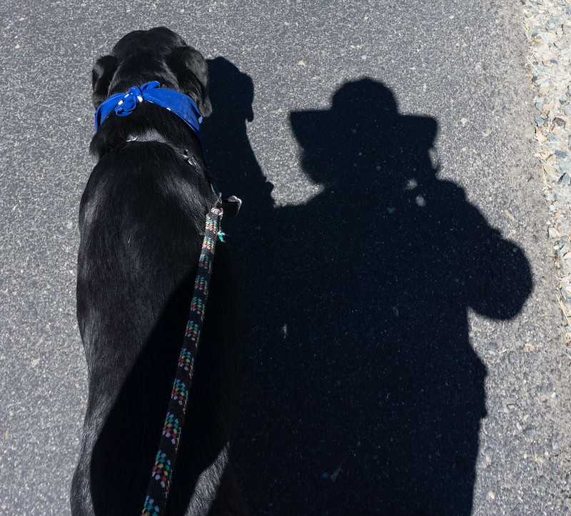 Shady walking with Dagny's shadow