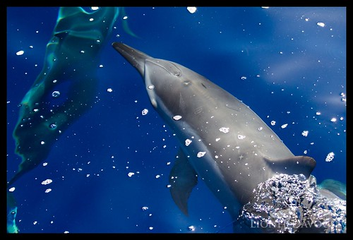 Dolphin shadows