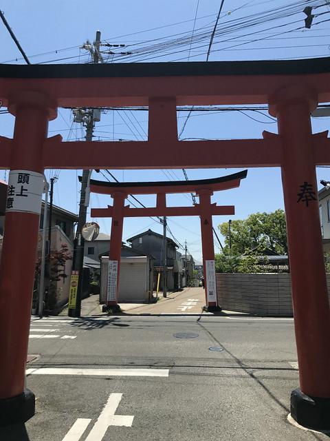 shinodanomorikuzunohajinja04