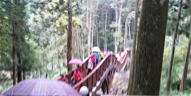 溪頭新建的銀杏橋 (4)