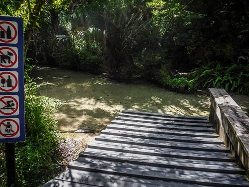 Juniper Springs Creek-94