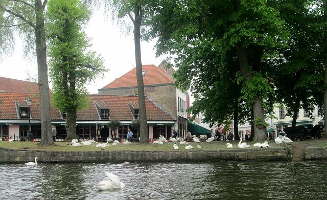 Boat trip swans