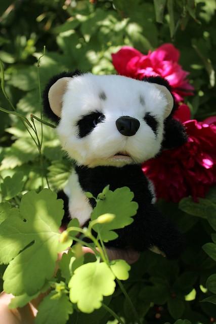 Panda in the garden