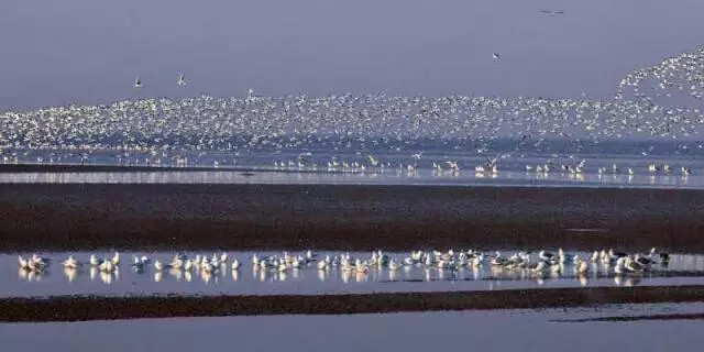 Nanpu Wetland © Jianmin Wang