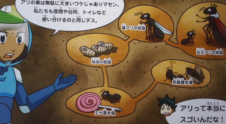 アリの巣の天井は丸い 地中世界のサバイバル
