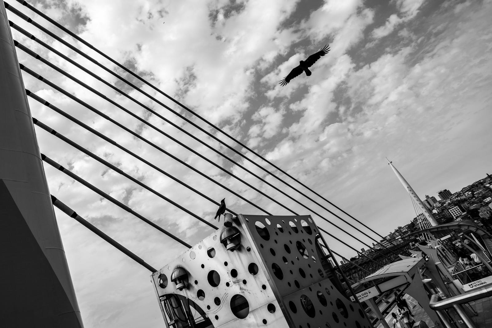 """Time to fly (again) / """"freedom is mine...""""   by Özgür Gürgey"""