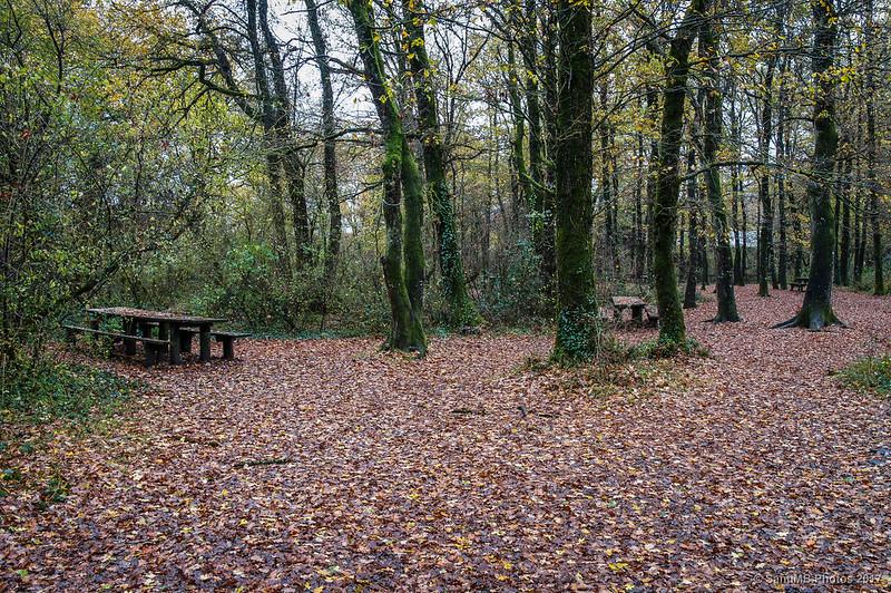 Zona de picnic en el Bosque de Orgi