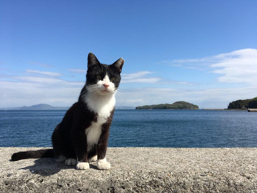 真鍋島:Manabe-shima Island (20160418)