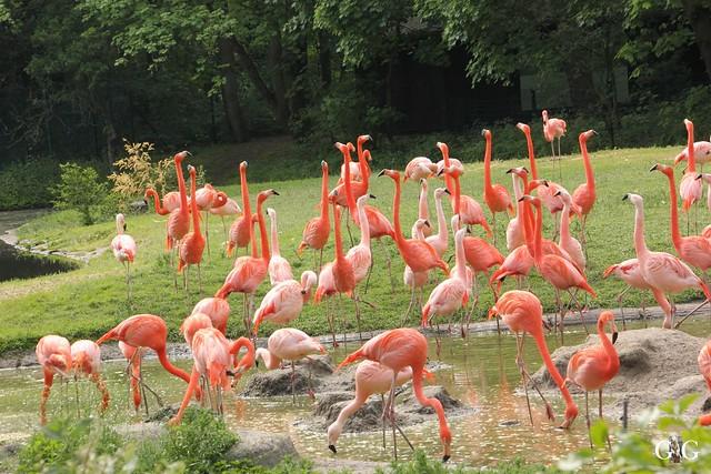 Besuch Tierpark Friedrichsfelde 21.05.201758