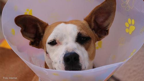 mascotas-curacion3