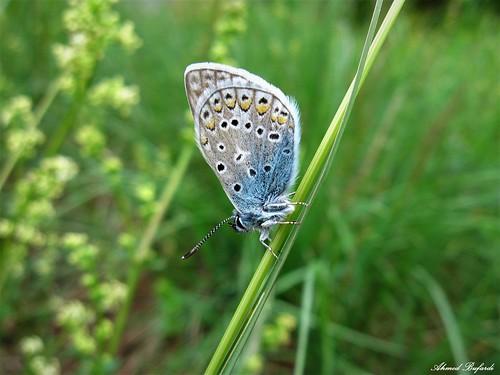Butterfly 1301
