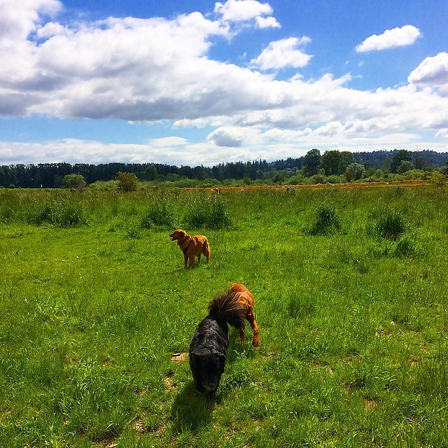 Field of Doggy Dreams.