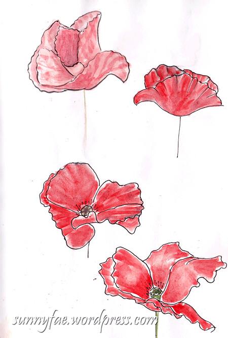 Sketching poppies 2