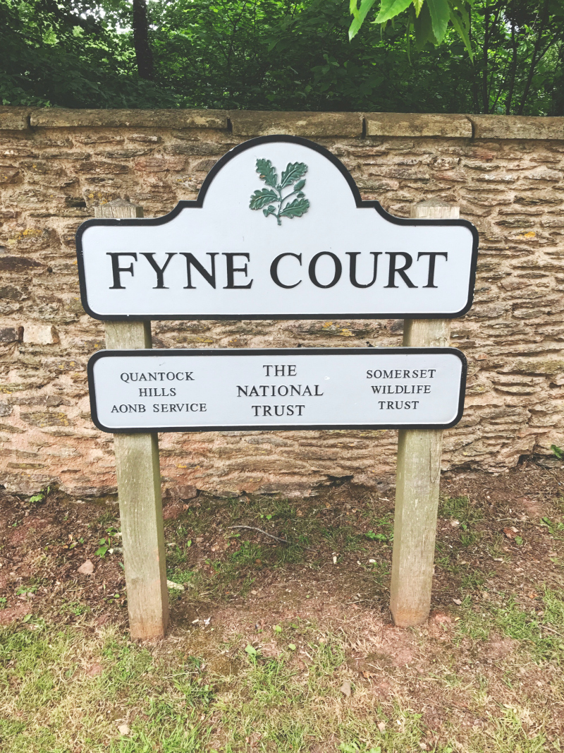 things to do in somerset blog national trust fyne court vivatramp