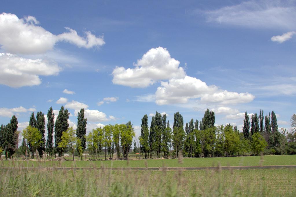 árboles defendiendo el camino