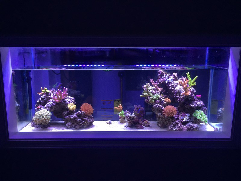 Lighting For 55 Gallon Reef Tank Reef Central Online