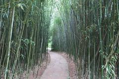 chinese scholars garden staten island botanical garden snug harbor by kristine paulus - Staten Island Botanical Garden