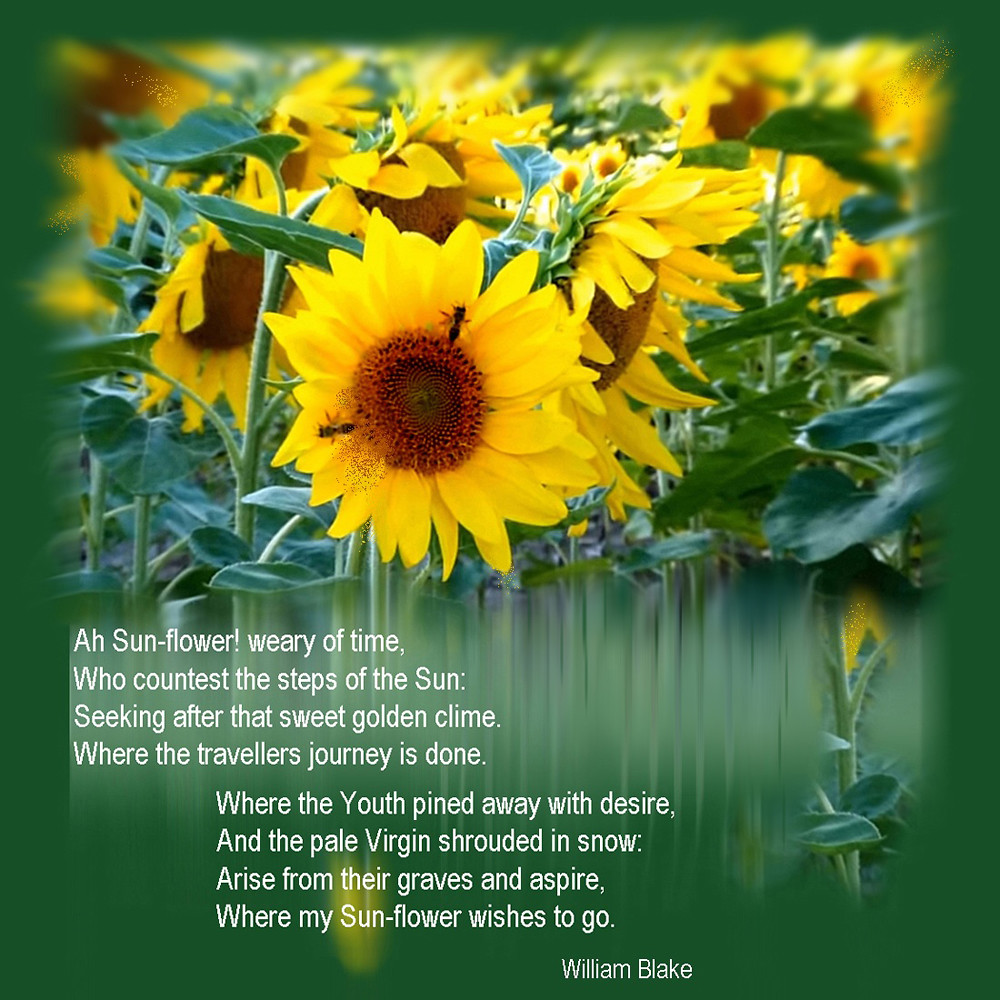 Yellow Flower Poem Images Fresh Lotus Flowers