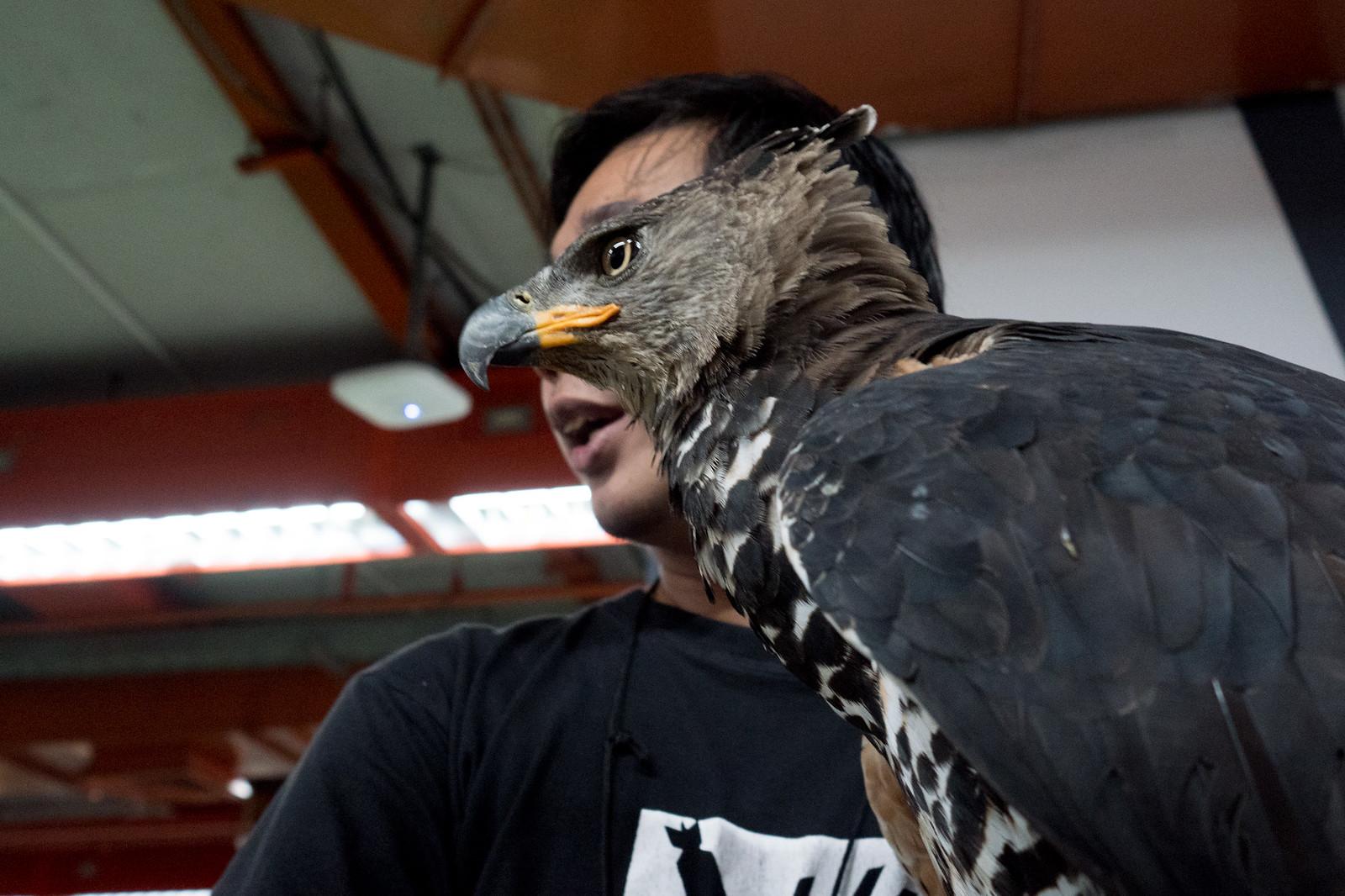 #7 Birdman | by jobChaowadee