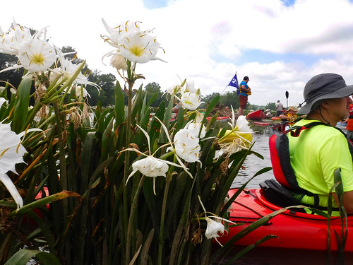 Landsford Canal Spider Lilies-088