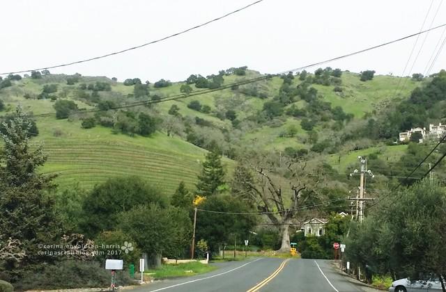 Silverado Trail - February 13
