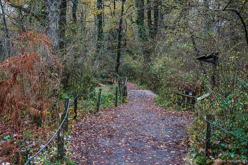 Entrando en el Bosque de Orgi