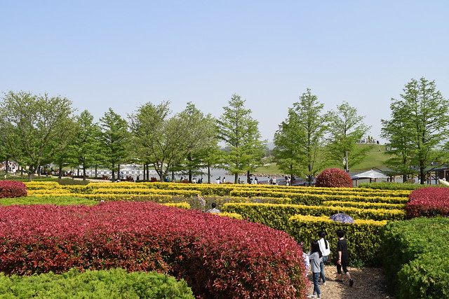 Suncheon Bay National Garden (18)