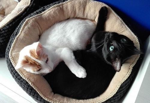 Gary, gatito blanco y naranja cruce Van Turco esterilizado muy activo nacido en Julio´16, en adopción. Valencia. ADOPTADO. 34843417851_daef632d08
