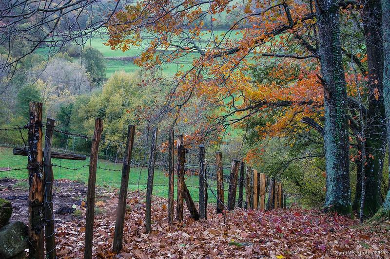 Alambrada bajo robles de hojas rojas