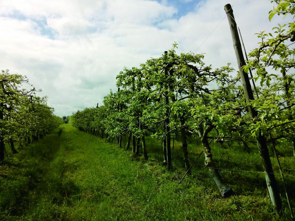 在法國南部小鎮上,這是已經營十來年的有機蘋果園。