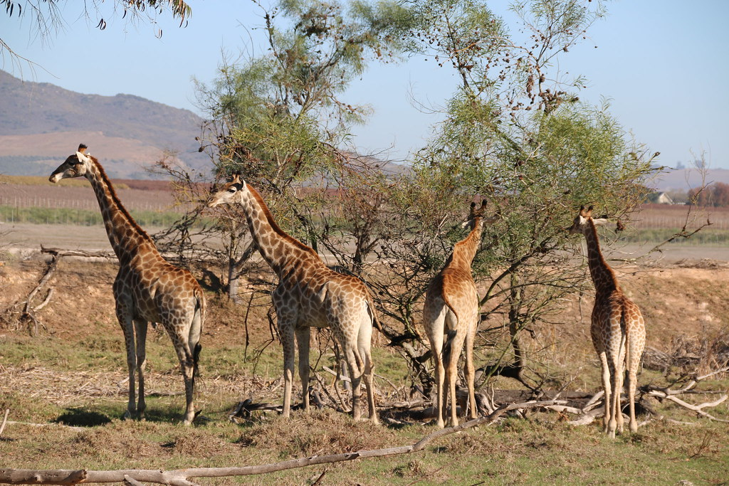 Villiera Wildlife Sanctuary