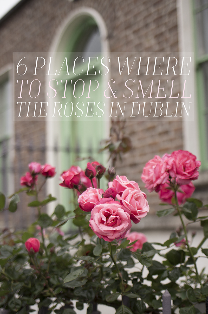 Places in Dublin Where to Stop and Smell the Roses