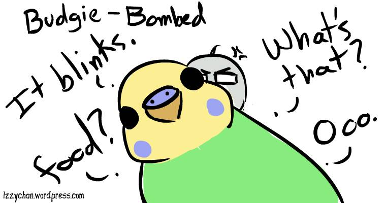 danger bird budgie