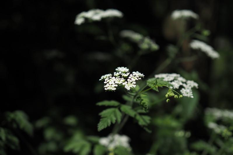 Pflanzengedöns