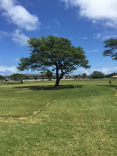 tree mokapu elementary | by trconnie