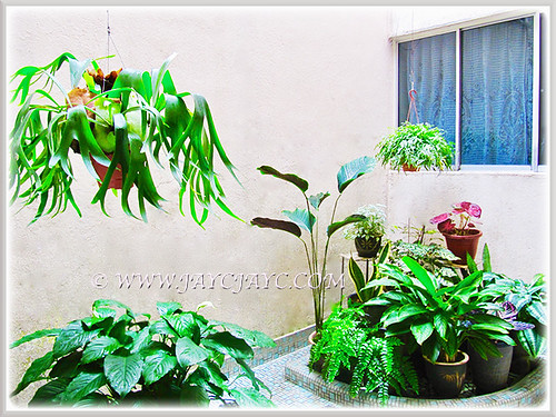 Our courtyard which houses mostly foliage plants