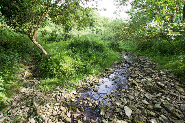 Stream beside the bridleway, Hill Bottom